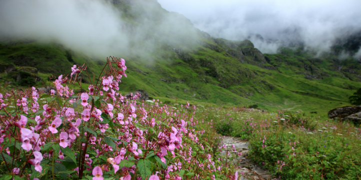 The Valley of Flowers  – Live More Zone