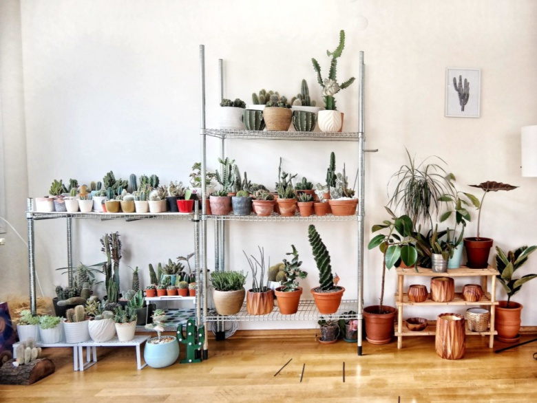 6 Tips On How To Pick the Perfect House Plant