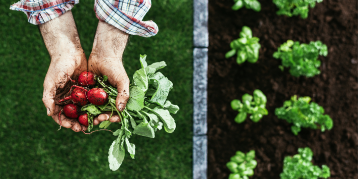 Type of Organic Farming  – Live More Zone