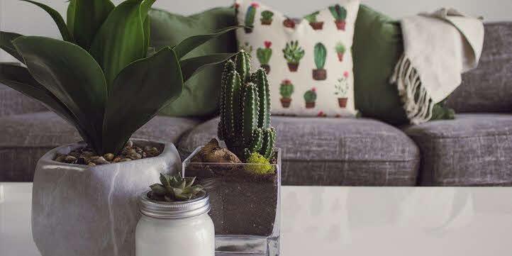 Use-plants-Home-decor-ideas-live-more-zone-DBS
