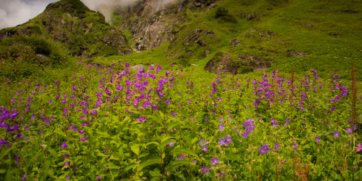 Valley Of Flowers – Live More Zone