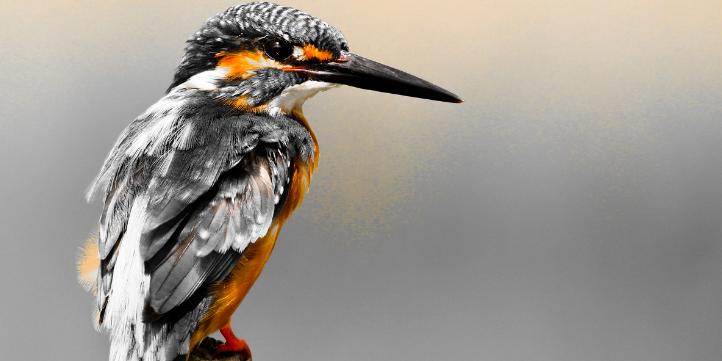 Vansda National Park – Live More Zone