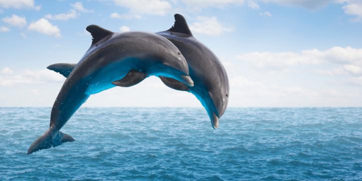 Vikramshila Gangetic Dolphin Sanctuary – Live More Zone