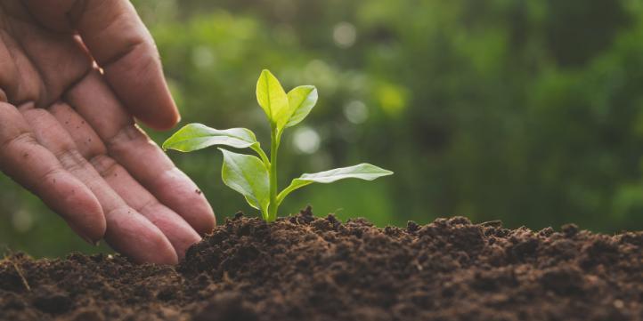 Organic Farming  – Live More Zone