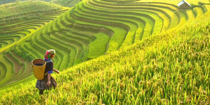 Myanmar – Live More Zone