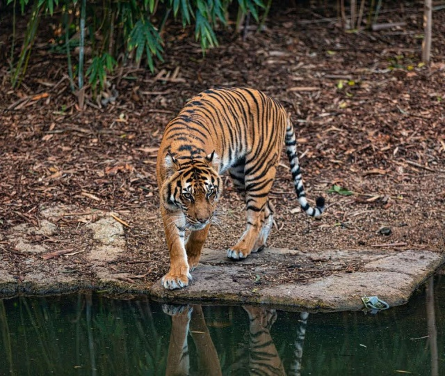 8 Wildlife Organizations In India Working For Endangered Species