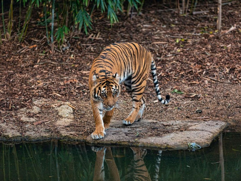 Top 8 conservation Projects for Wildlife in India