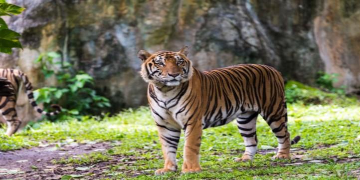 Wildlife protection society in India