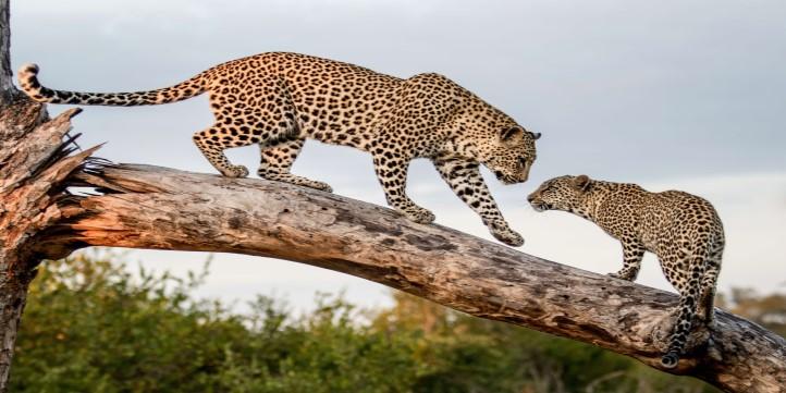 Wildlife organizations working for endangered species